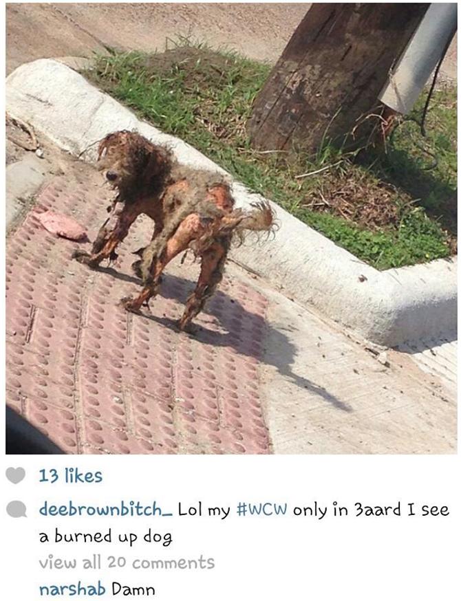 Burned dog living on the street in Houston's 3rd ward.