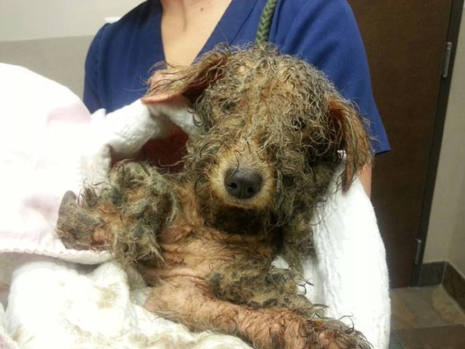 Precious dog saved from abuse and the streets in Houston