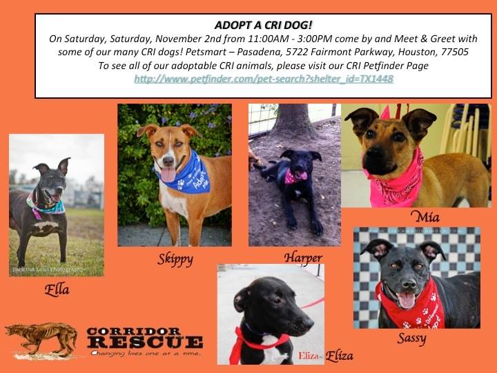 Dogs available for adoption from CRI Houston, Texas