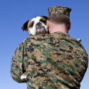 Rescue Dogs Helping Veterans Suffering from PTSD