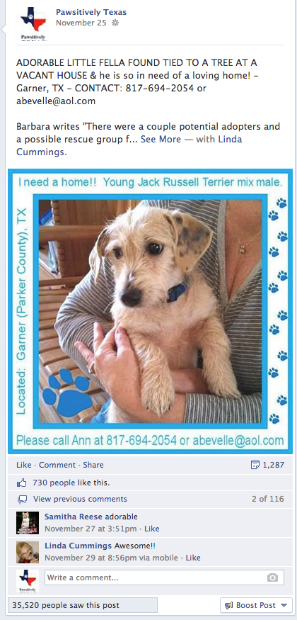Dog adopted on Pawsitively Texas animal rescue network