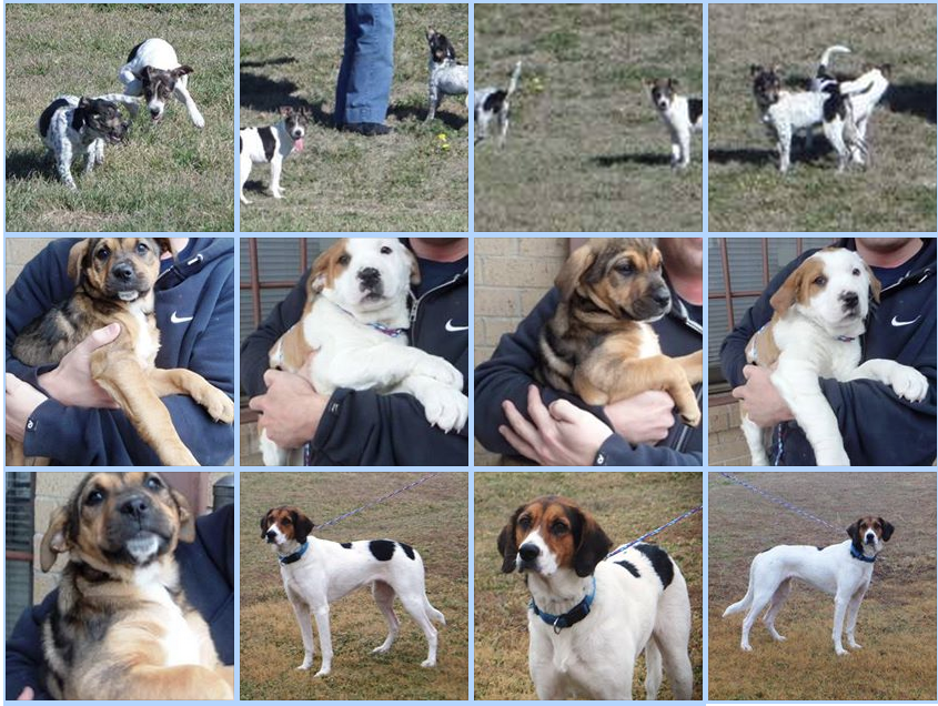 Dogs available for adoption or rescue in Cleburne Texas