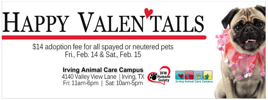 Valentine's Day Themed Pet Adoption Poster-Irving, Texas animal shelter