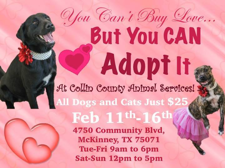 Adopt love pet adoption Collin County Texas
