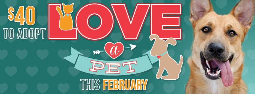 Austin Texas pet adoption Valentine's day promotion
