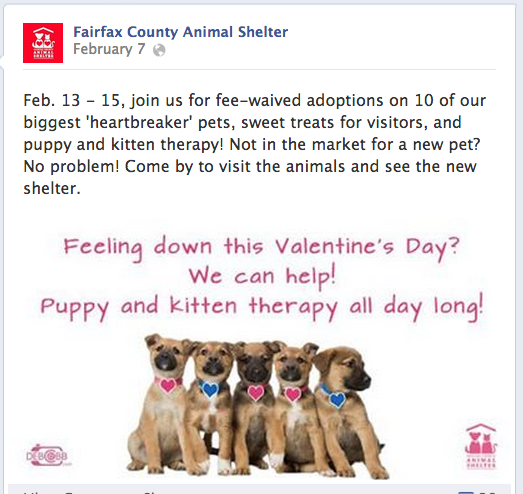 Fairfax County Animal Shelter Valentine Pet Adoption Promotion
