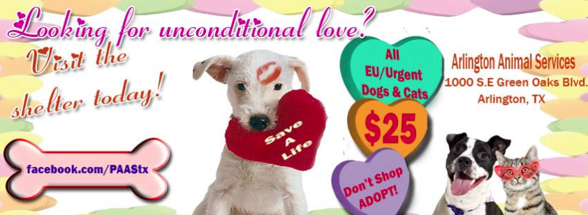 Pet Adoption is love Valentine's Day promotion