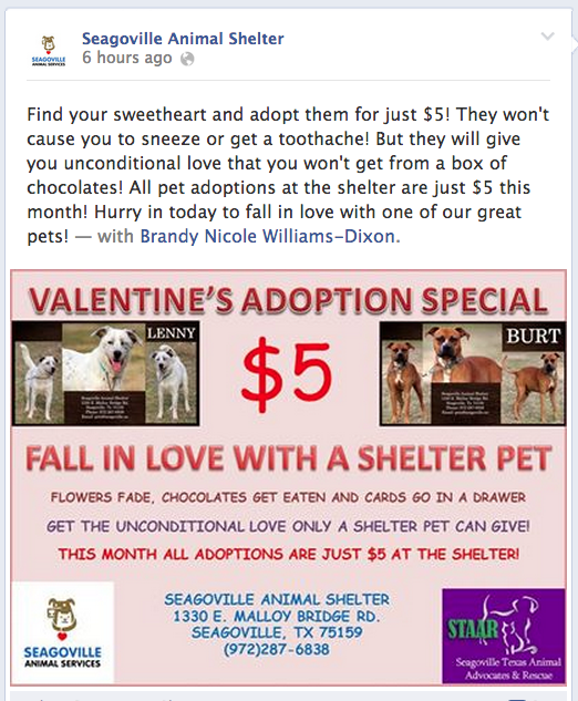 Seagoville Texas animal shelter pet adoption for Valentine's Day