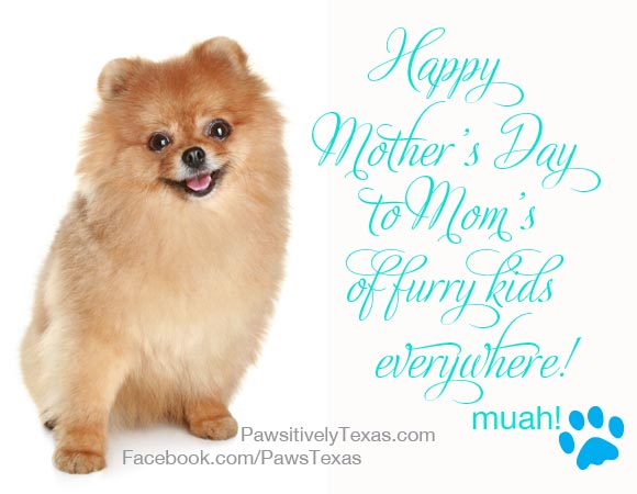 Happy Mothers' Day Pet Moms photo