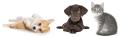 Pet Adoption Club Image