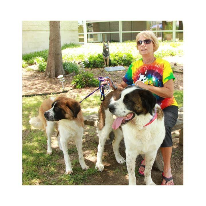 Adopted dogs in texas