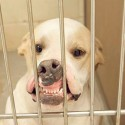Photo Gets Texas Shelter Dog Adopted photo
