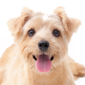 Animal Rescue Foster Volunteer Recruitment Tips (photo)
