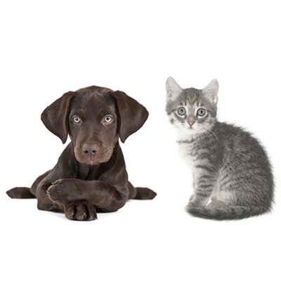 Animal Rescue Resources (photo)