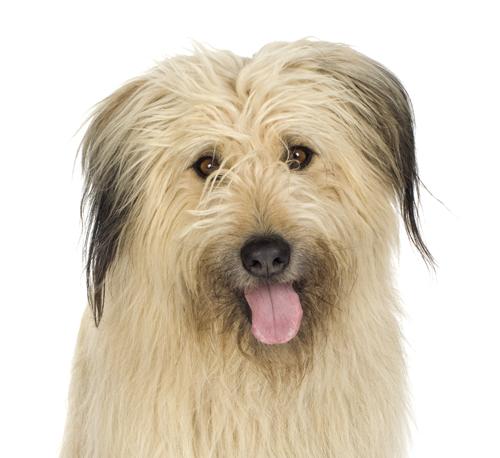 Animal Rescue Volunteer Recruitment Tips