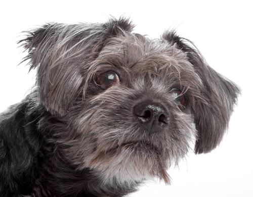 Animal Shelter Advocacy (photo)