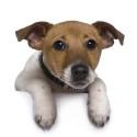 Animal Shelter Crisis Management (photo)