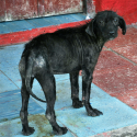 How-To-Rescue and Rehome Stray Dogs (photo)