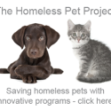 How to save homeless shelter animals a video series (photo)