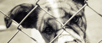 Low-Cost Animal Shelter Disease Management (photo)
