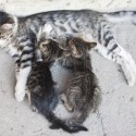 How to save homeless cats and kittens (photo)