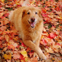 Dog Names Inspired by Nature photo