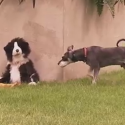 Dogs Pranked by Dog Puppet Video