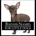Badass Names for Little Dogs
