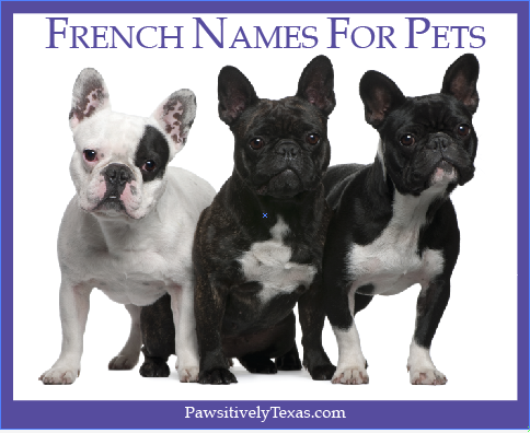 French Names For Pets