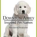 Pet Names Inspired by Downton Abbey