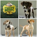 Texas Shelter Puppies in Puppybowl XII
