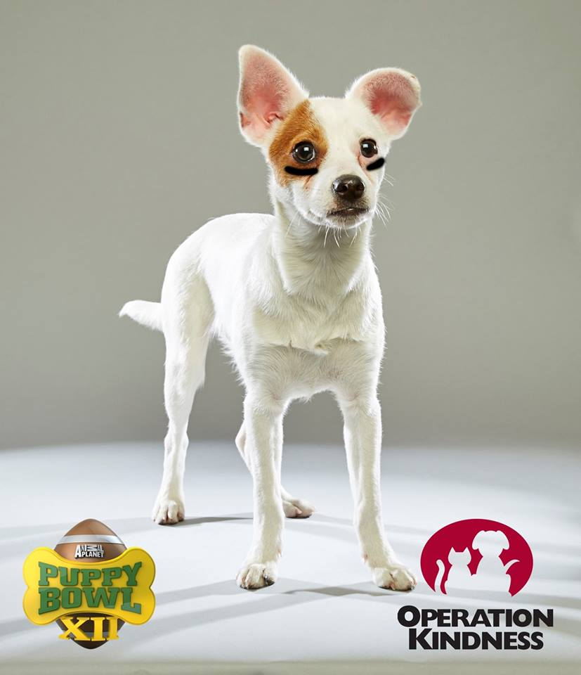 Carrollton Shelter Pet Stars in Puppybowl XII