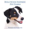 Texas Inspired Dog Names
